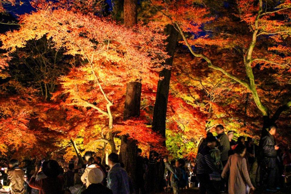 紅葉の季節に合わせて観光地や観光寺院ではさまざまな行事が催されます。イベントから探る秋の京都大全。