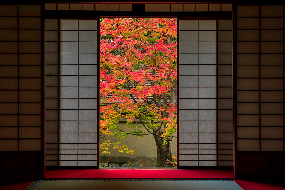 雲龍院の紅葉