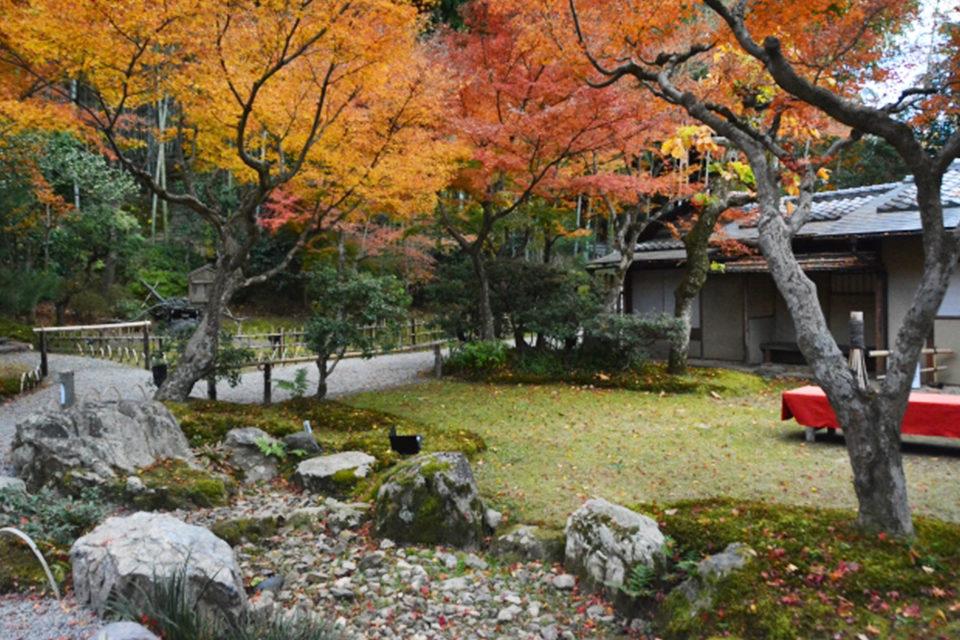 京都でも屈指の名所!昼間の紅葉を楽しむ紅葉スポット・昼間から日没後まで堪能できる紅葉スポットをご紹介!!