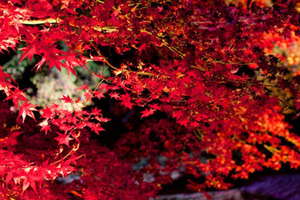 京都の紅葉イメージ