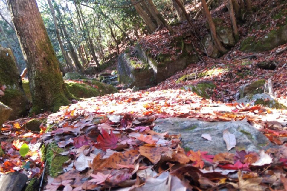 るり渓落ち葉