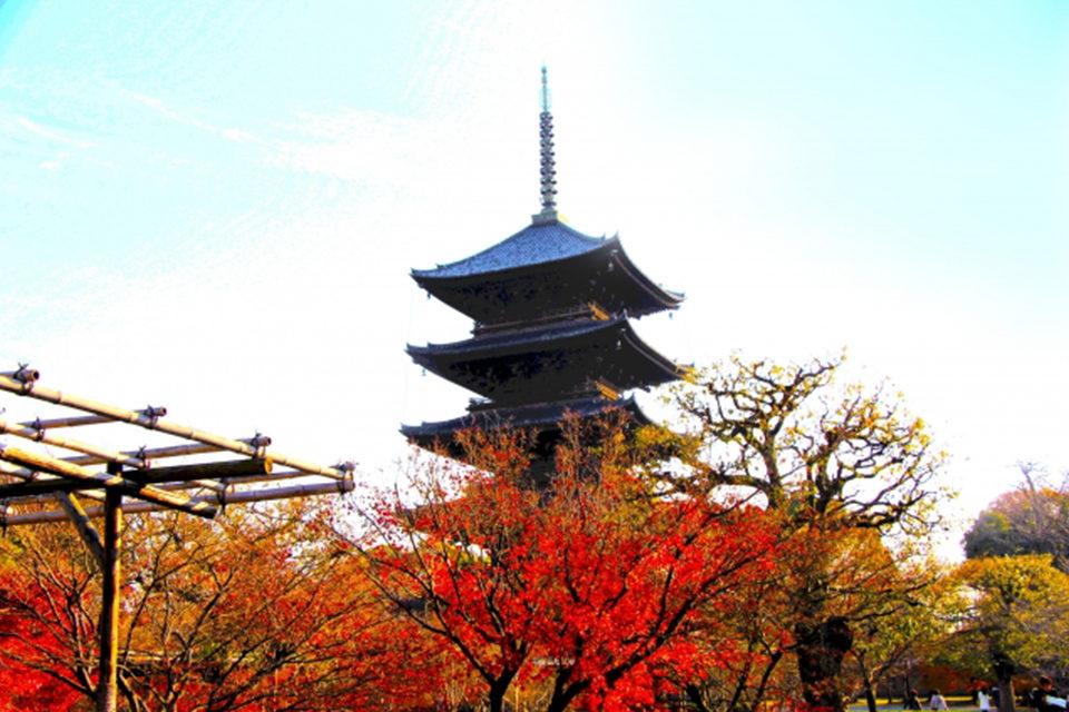 京都らしい風景と言ったら五重塔!秋の京都ならではのフォトジェニックな写真を撮れる紅葉の名所をご紹介!!