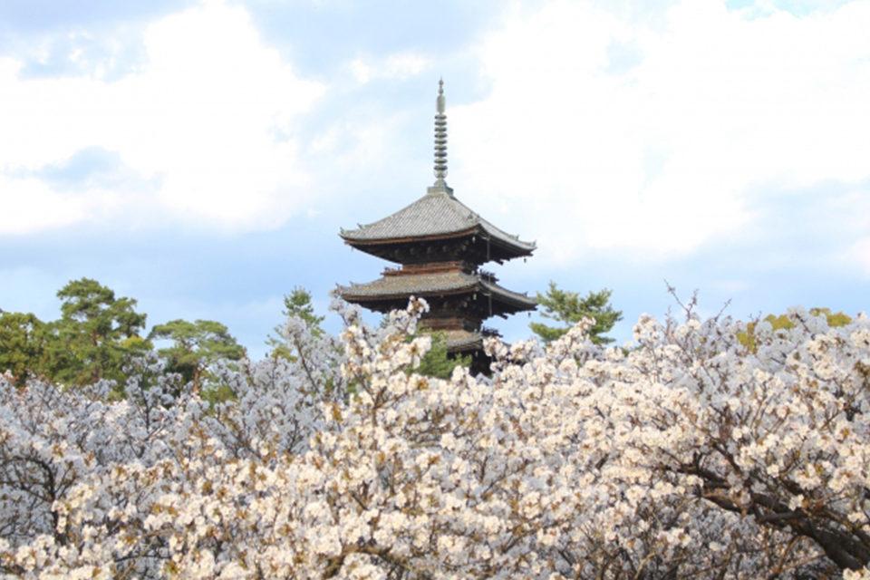 秘宝と季節の彩りを求めて「御室」へ。遅咲き桜で有名な御室仁和寺には、秋の魅力もたっぷり備わっています。