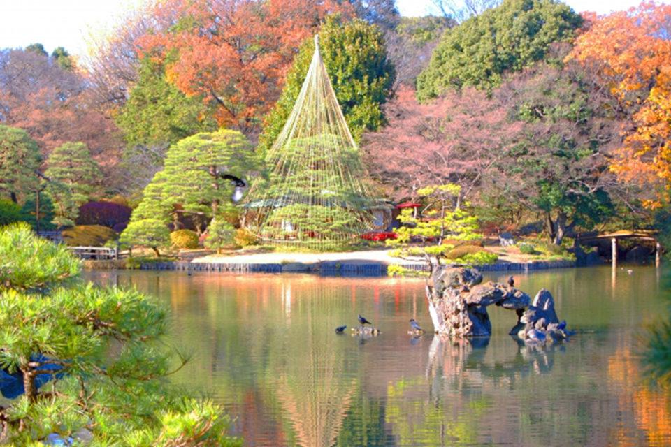 多くの木々が植わっている場所では紅葉が存分に楽しめます。祇園の円山公園はそうした場所の代表格。
