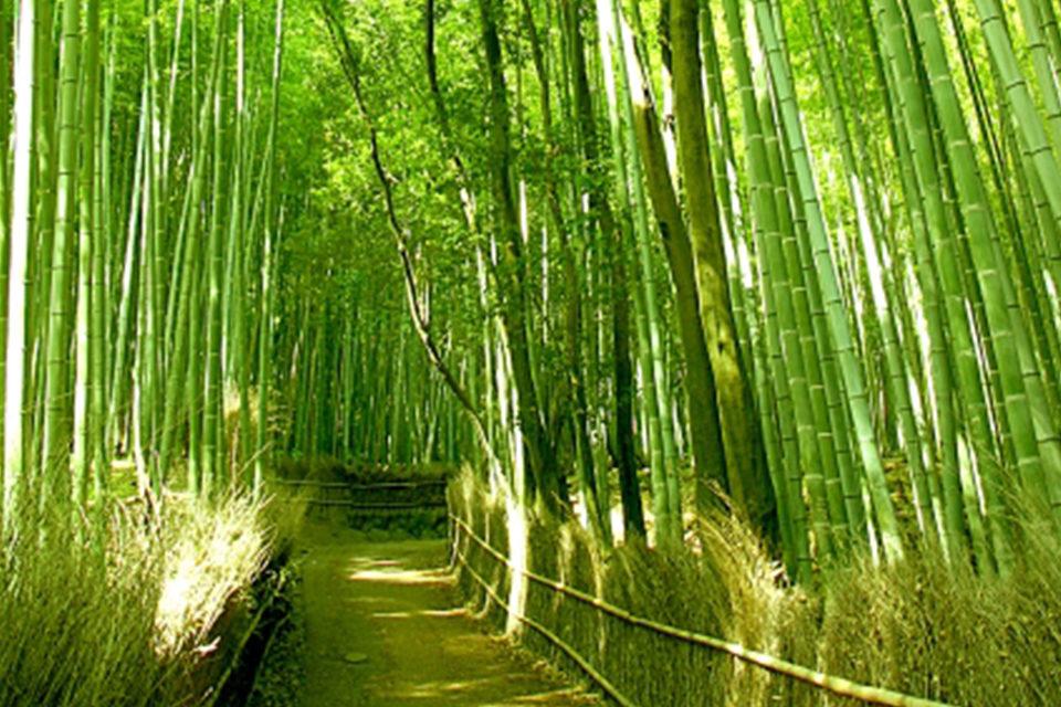 奥嵯峨の入口にあたる「竹林の小径」、微かな笹の葉擦れに耳を傾けると、失われた大竹藪が見えるかも