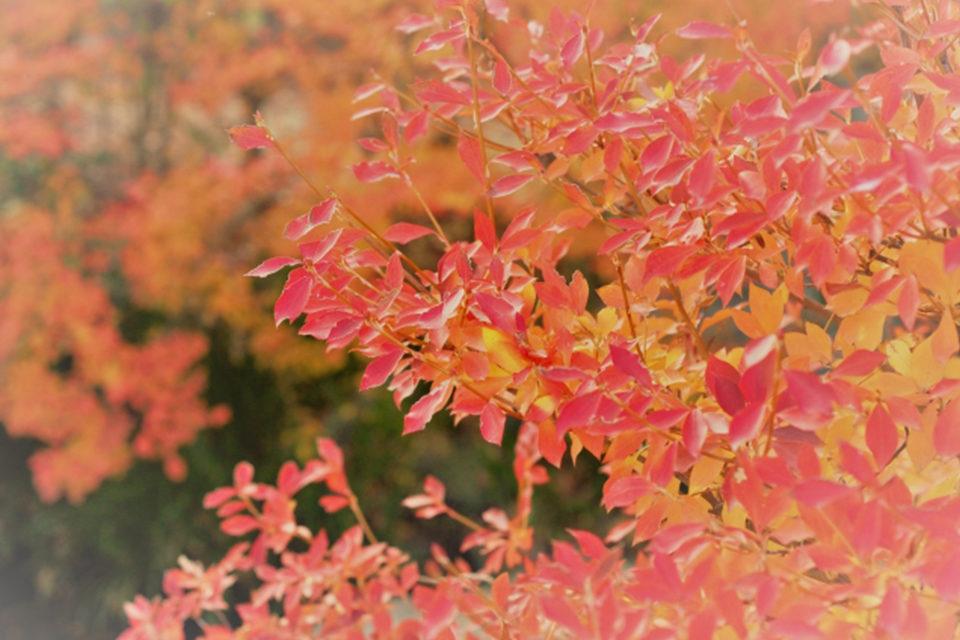 美しい紅葉を何倍も楽しめる秋の京都でのピクニック!ピクニックにおすすめの紅葉スポットをご紹介!