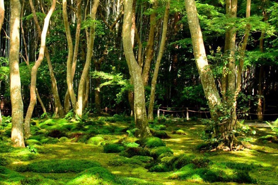 苔庭の草庵