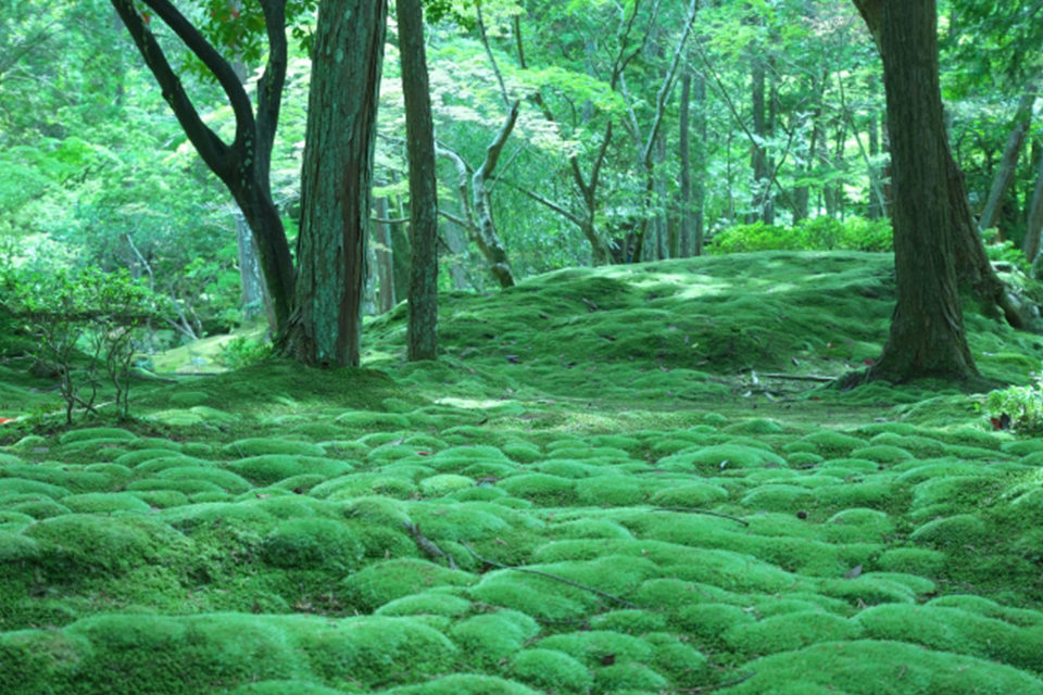 苔寺の庭園