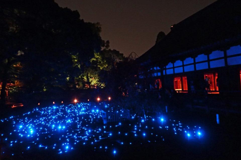 青蓮院庭園ライトアップ