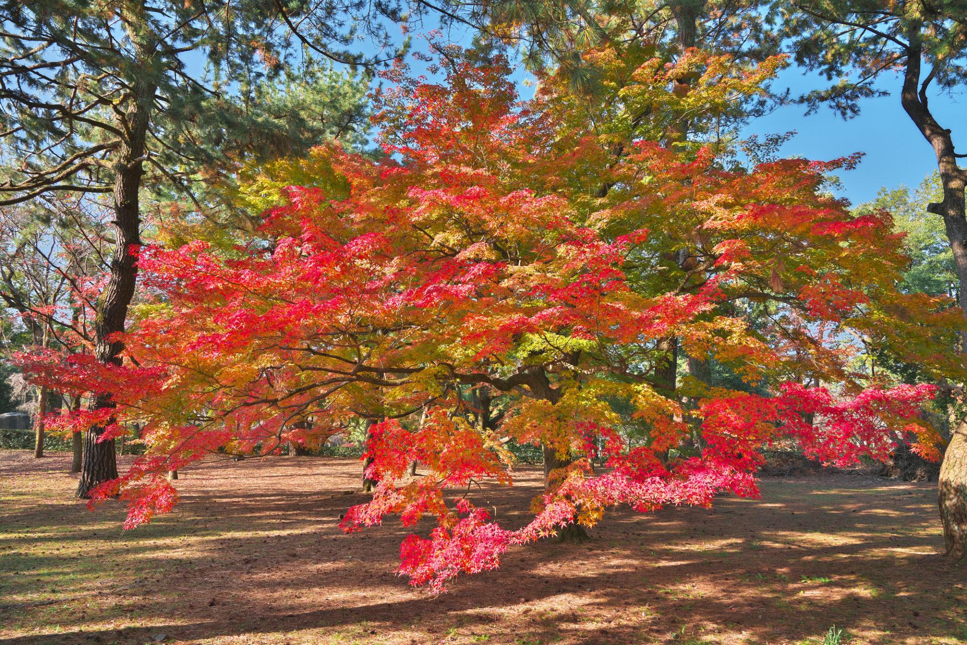 圓徳院 紅葉