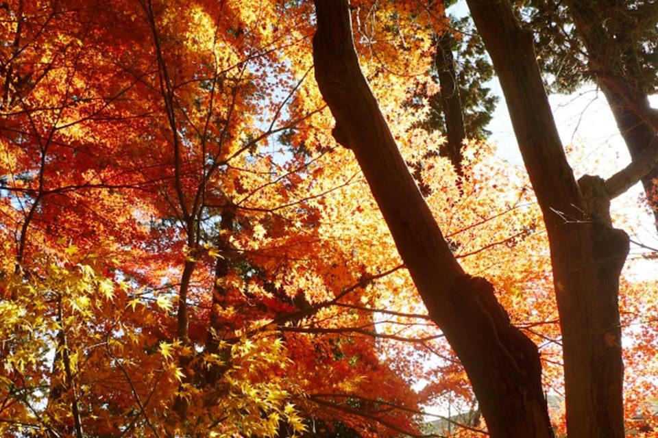 京都の紅葉は京都市だけじゃない!長岡京市で楽しむことができる紅葉の名所をご紹介!