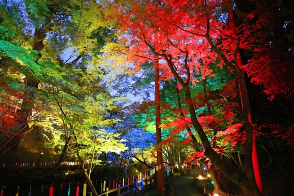 混雑少なめの穴場がたくさん!京都・西陣のおすすめ紅葉スポットをご紹介!