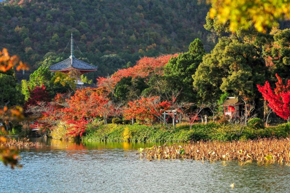 嵯峨野の秋を彩るは、平安王朝の基礎を固めた嵯峨天皇の歴史遺産。門跡寺院に垣間見る歴史の重みを併せて拝観。