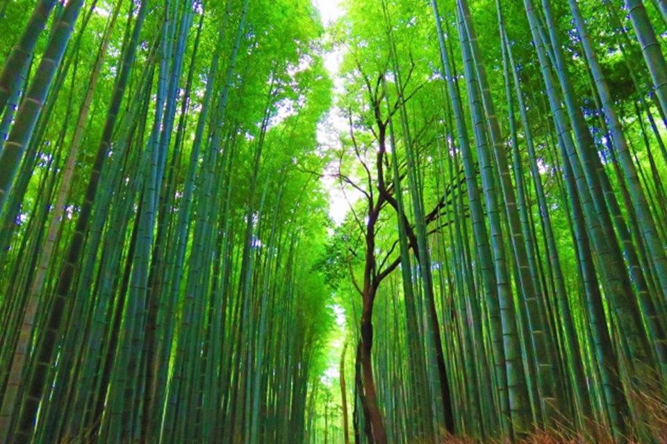 京都・嵐山で美しい紅葉と圧巻の竹林を鑑賞!おすすめの紅葉の名所とライトアップ情報をご紹介!