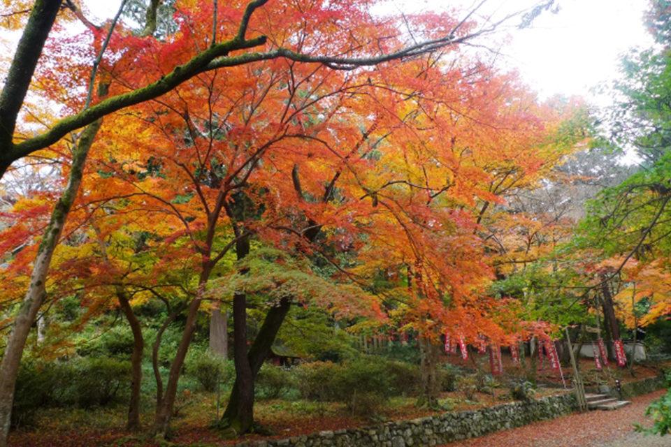 毘沙門堂に勧修寺など山科には魅力的な観光物件がたくさんあります。京都観光の穴場ではない、山科独自のカラーもあります