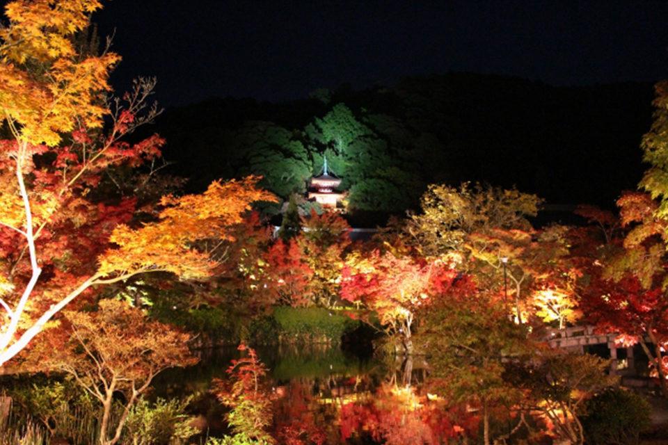 夜の紅葉狩りは京都・永観堂!鮮やかな紅葉を照らすライトアップは格別な美しさ!