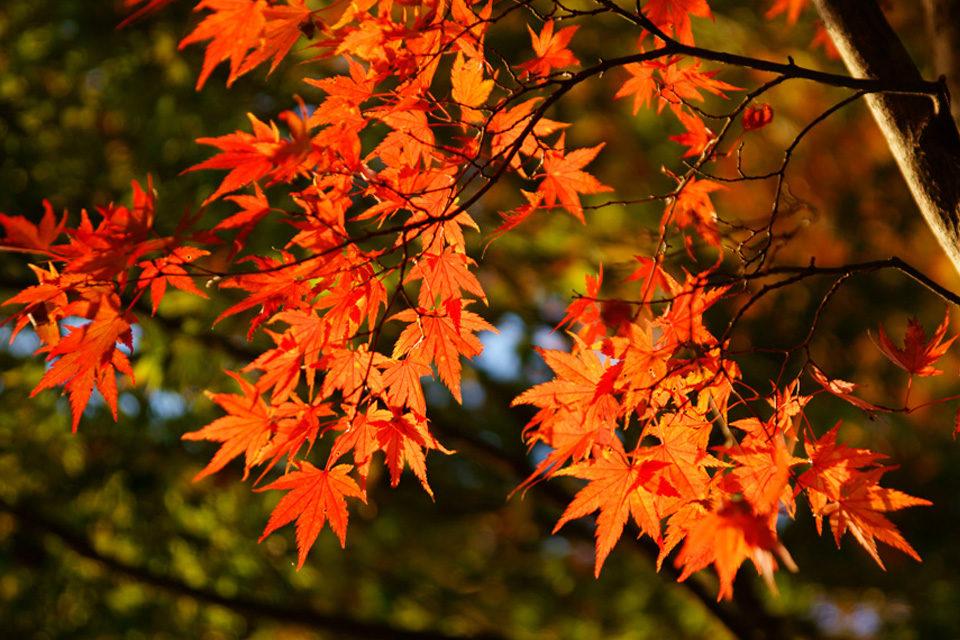 京都の紅葉 2