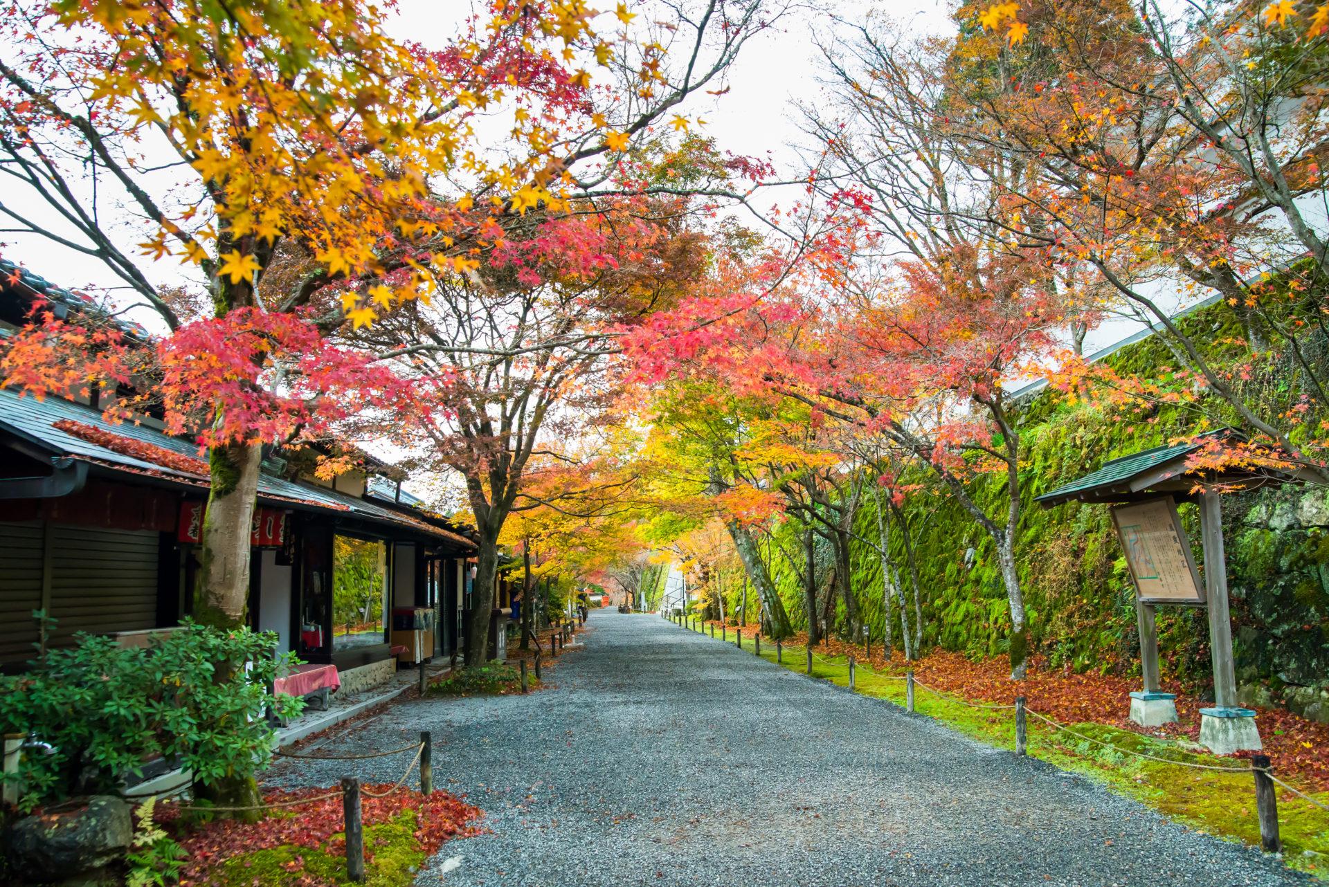 京都 大原三千院 紅葉の参道