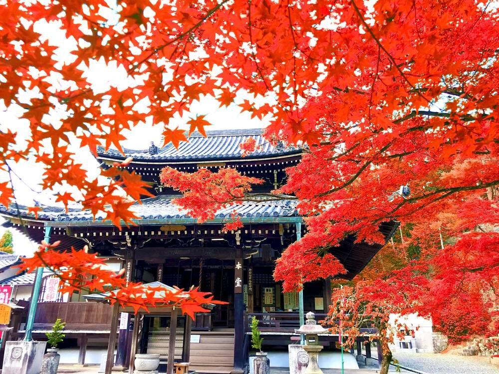 今熊野観音寺本堂 紅葉
