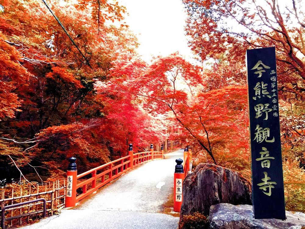 今熊野観音寺鳥居橋 紅葉