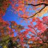 円通寺の秋