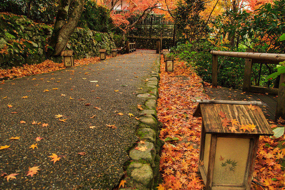 宝泉院の紅葉