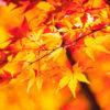 植物園の紅葉
