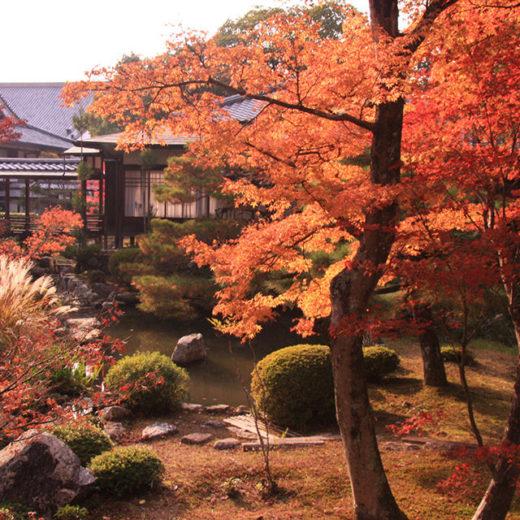秋の大覚寺庭園