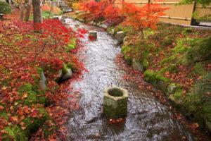 秋の永観堂