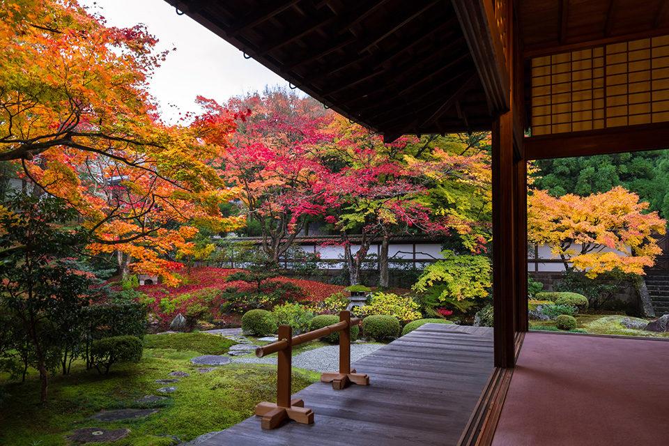 秋の泉涌寺