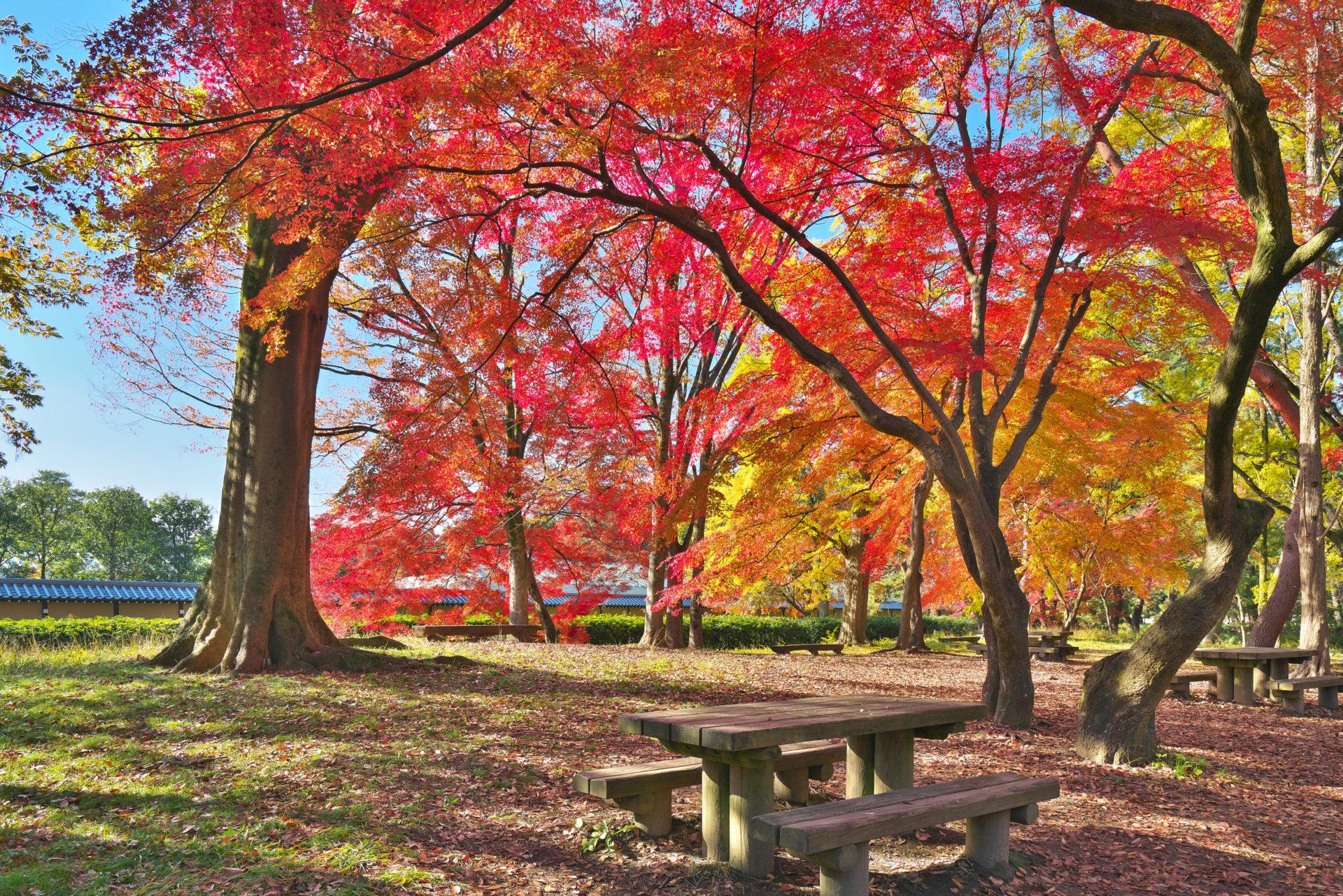 秋盛りの京都御苑