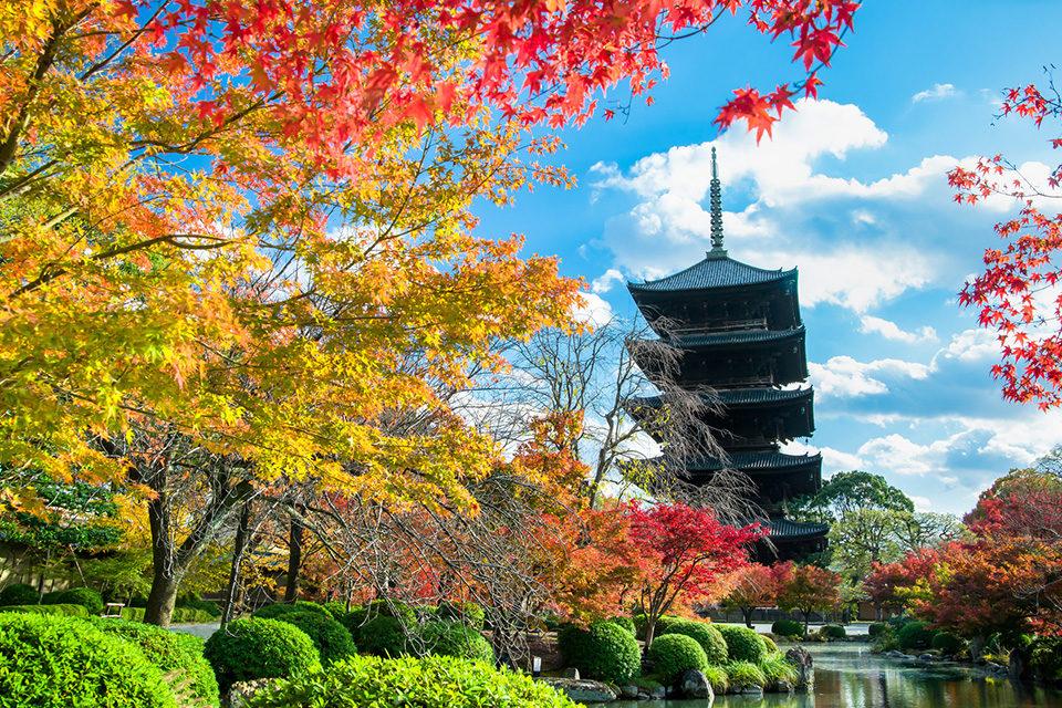 紅葉の東寺五重塔