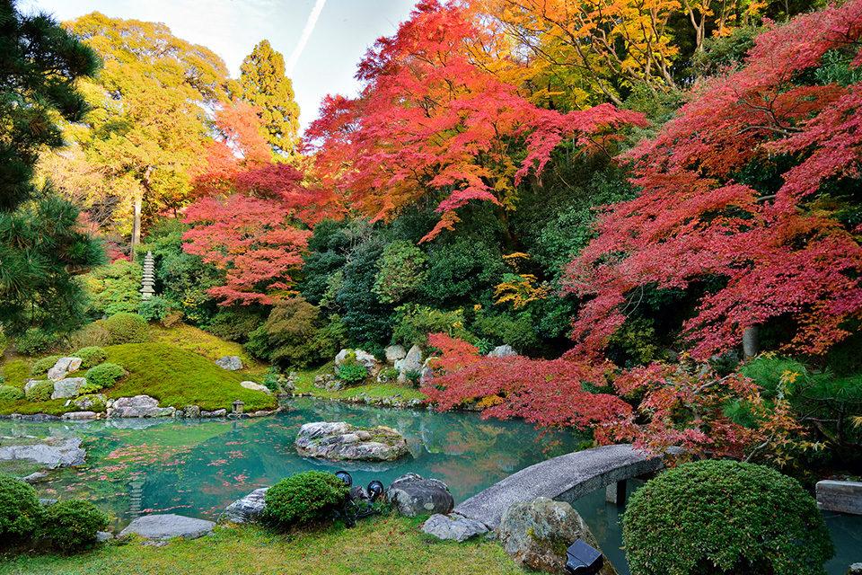 青蓮院門跡の紅葉