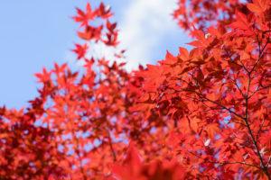 鮮やかな紅葉と青空