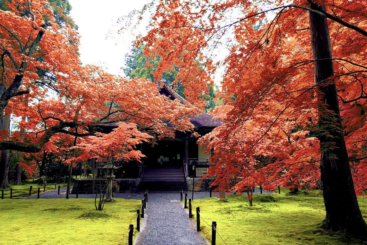 三千院 紅葉 京都