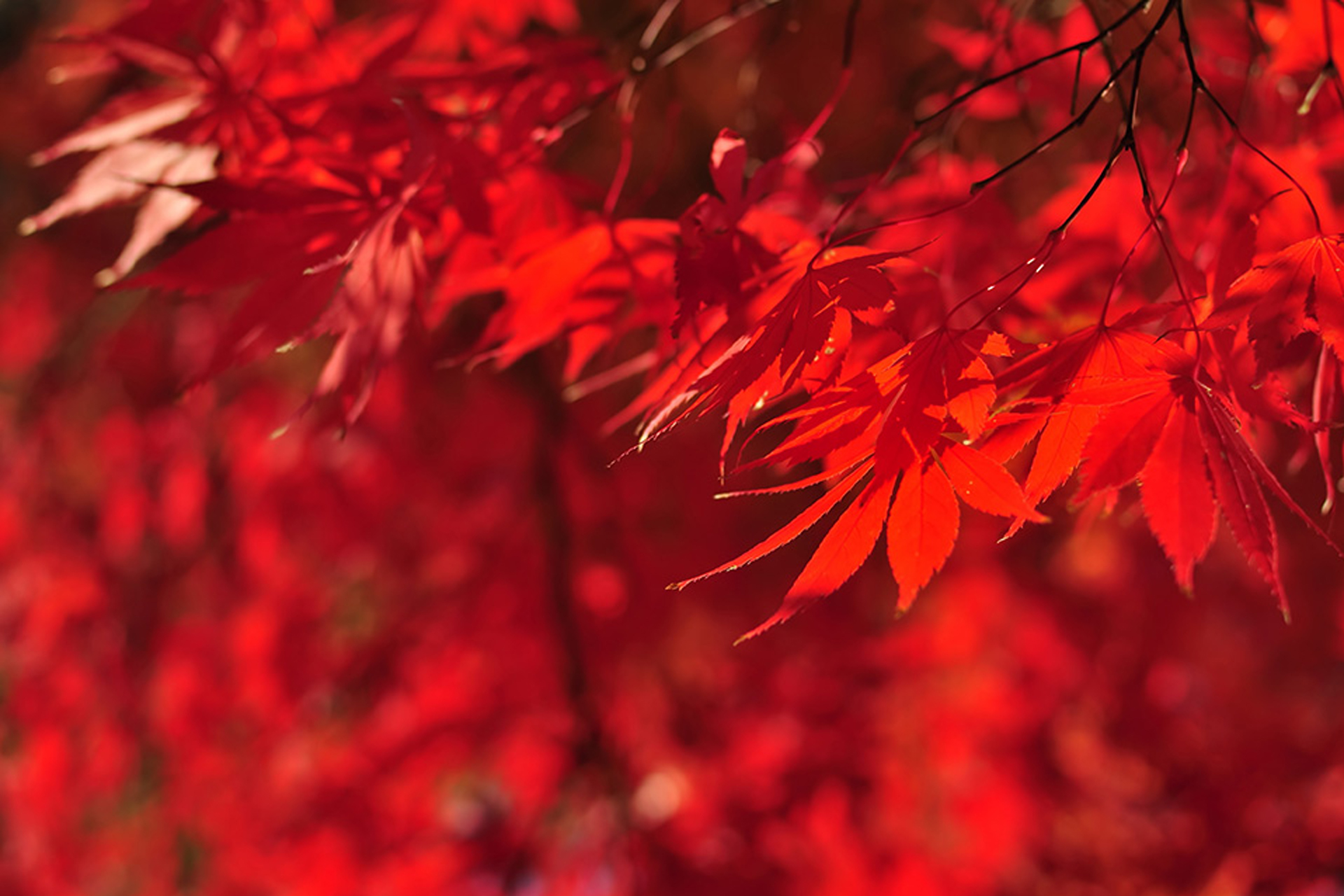 京都 おすすめ紅葉