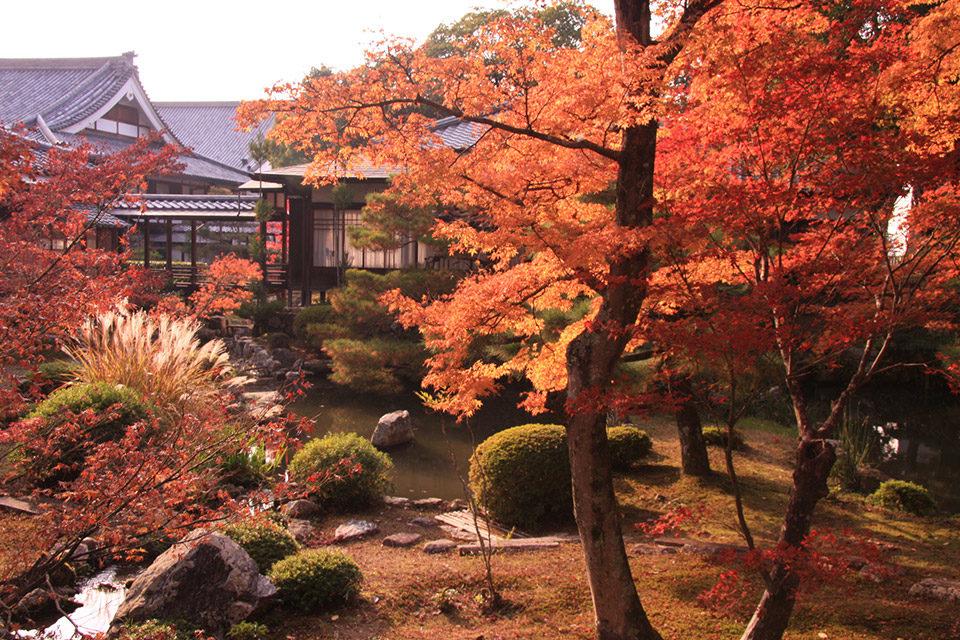 京都の紅葉 大覚寺