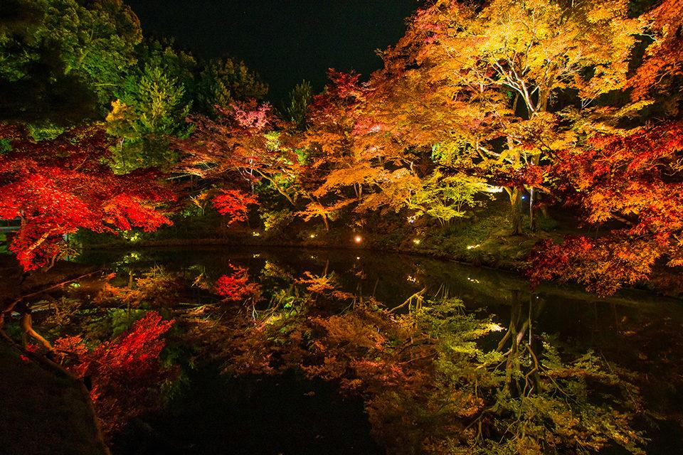 高台寺 紅葉 京都