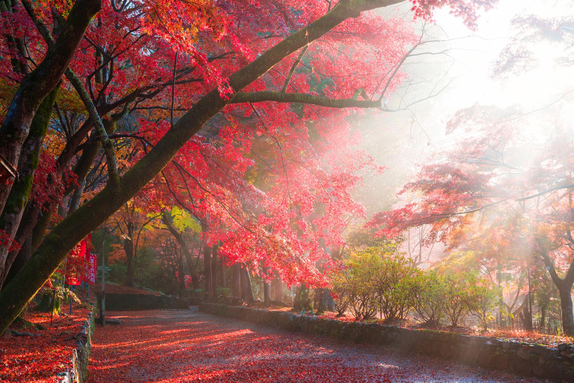 京都 毘沙門