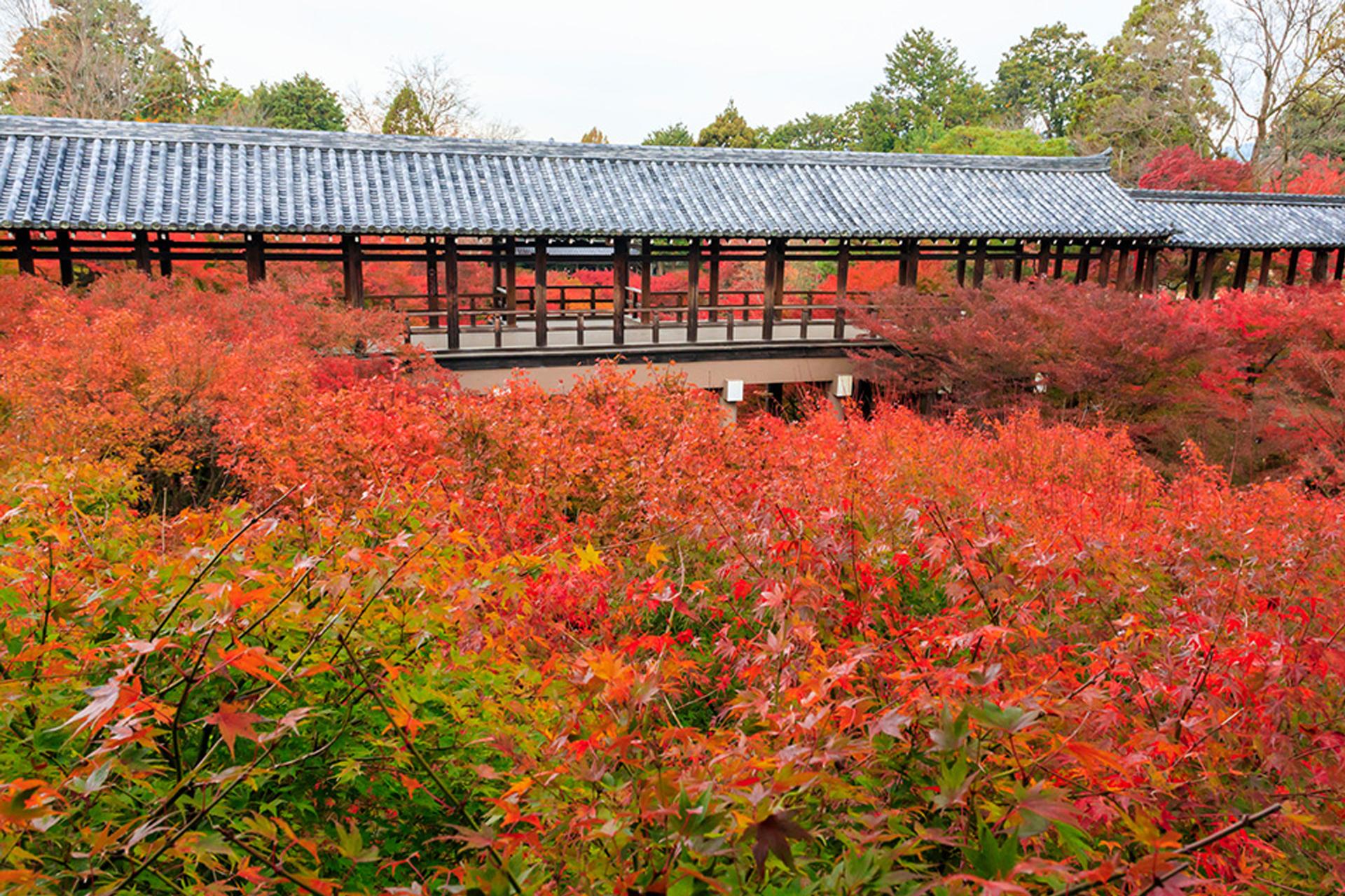 東福寺 京都 紅葉