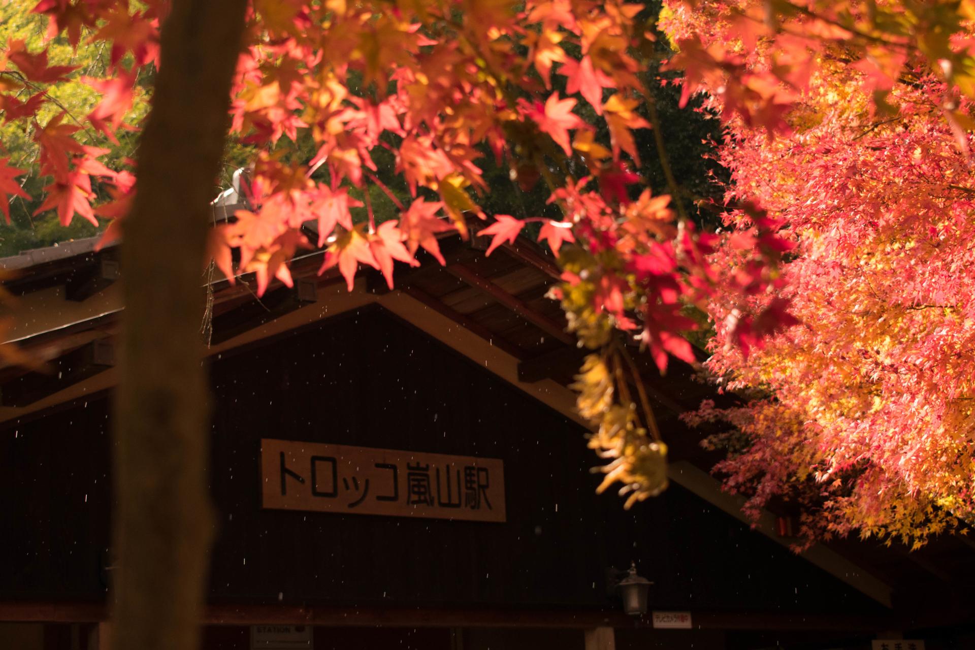 嵯峨野 トロッコ 京都