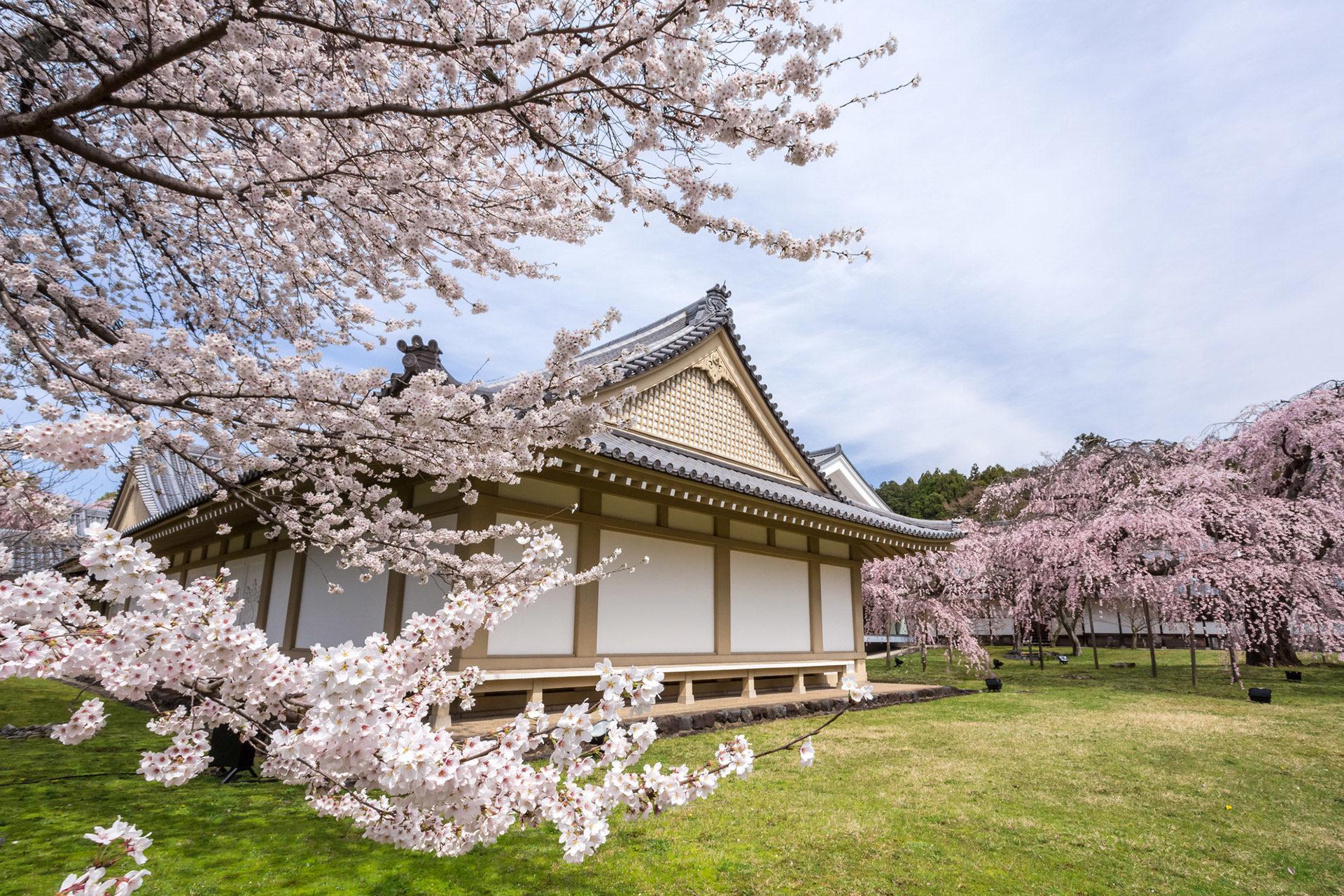 京都-醍醐寺-桜