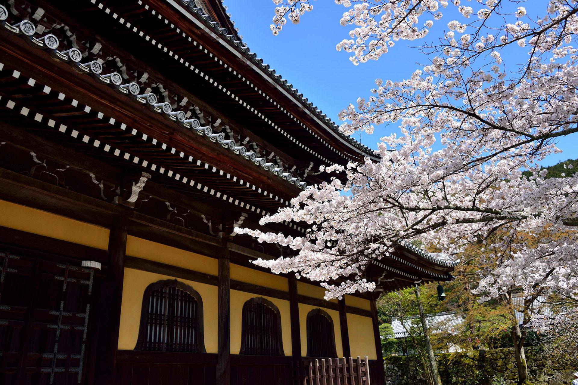南禅寺-桜