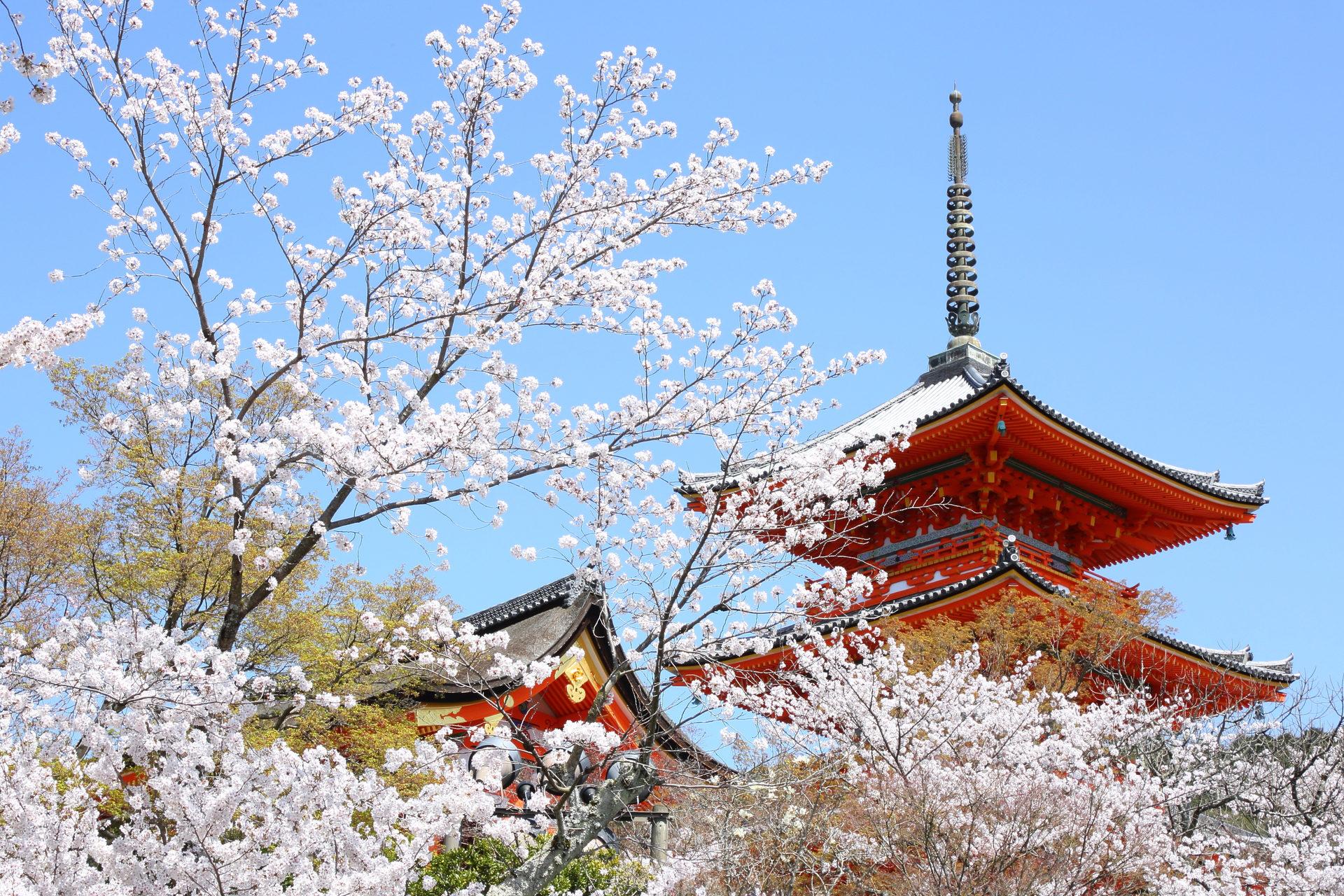 清水寺の桜と五重塔