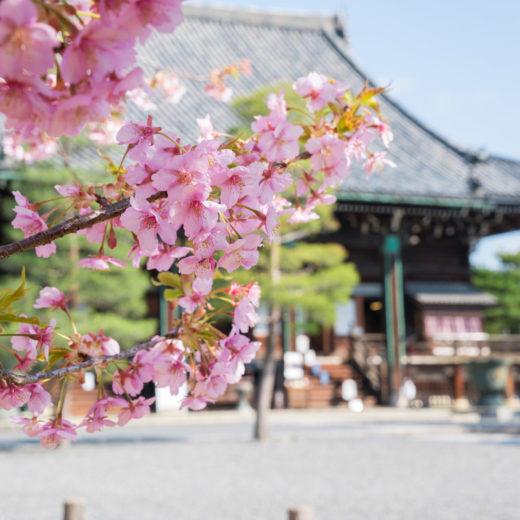 清水寺-桜