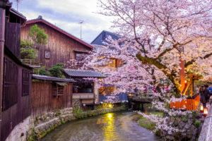 京都-お店-桜-イメージ