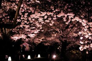 京都-さくら祭-イメージ