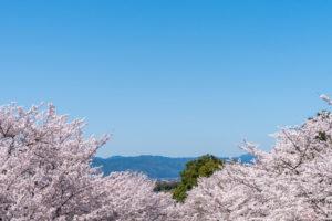 京都-ロープウェイ-桜