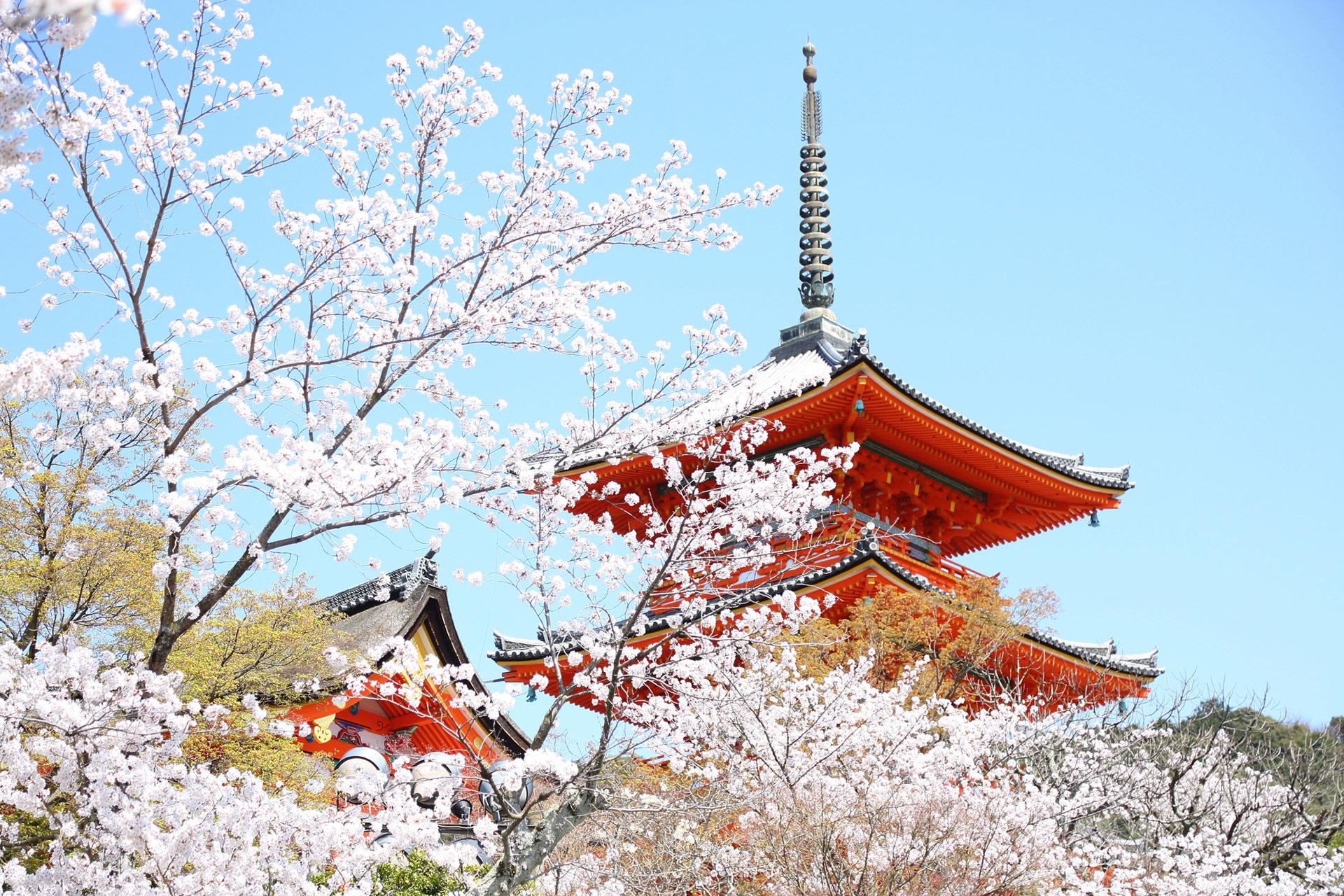 京都-五重塔-桜-イメージ