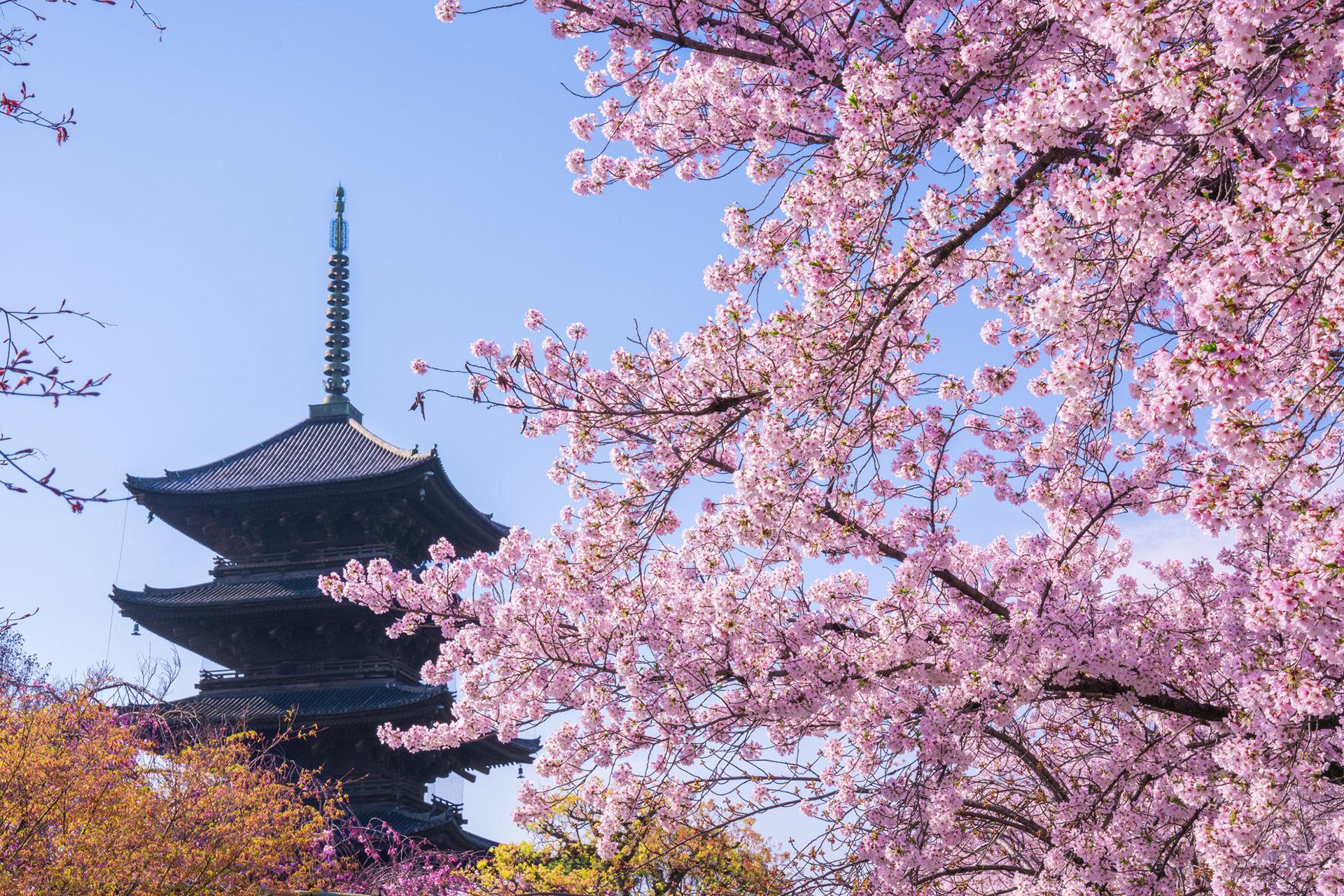 京都-五重塔-桜